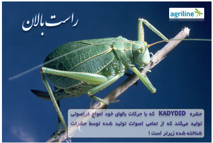 """صدای """"راست بال"""" زیرترین صدا در میان حشرات است"""
